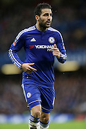 Cesc Fabregas of Chelsea looks on. The Emirates FA Cup, 5th round match, Chelsea v Manchester city at Stamford Bridge in London on Sunday 21st Feb 2016.<br /> pic by John Patrick Fletcher, Andrew Orchard sports photography.