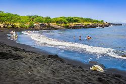 Punaluu Black Sand Beach, green sea turtle, Chelonia mydas, basking on the beach and people playing, Big Island, Hawaii, USA, Pacific Ocean