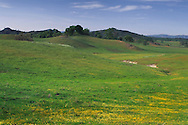 Wilddflowers in pasture land in spring, Isabel Valley, Santa Clara County, California