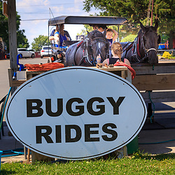 Strasburg, PA – June 19, 2016: Buggy rides horses wait to take tourist on another ride in Lancaster County, Pennsylvania.