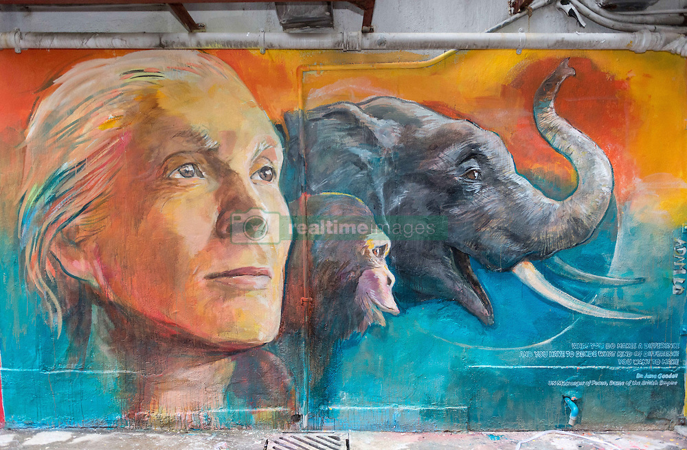 November 10, 2016 - Hong Kong, Hong Kong S.A.R, China - Wall painting by local artist Adam Lo of Dame Dr Jane Goodall..''Walls of Change'' street art in Hong Kong painted ahead of the The √íHope for Wildlife√ì Gala Dinner to raise awareness for the plight of endangered animals the world over..Sai Yin Pun Hong Kong.10th November 2016. Photo by Jayne Russell. (Credit Image: © Jayne Russell via ZUMA Wire)