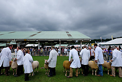 © Licensed to London News Pictures.14/07/15<br /> Harrogate, UK. <br /> <br /> Sheep are lined up in one of the arenas to be judged on the opening day of the Great Yorkshire Show.  <br /> <br /> England's premier agricultural show opened it's gates today for the start of three days of showcasing the best in British farming and the countryside.<br /> <br /> The event, which attracts over 130,000 visitors each year displays the cream of the country's livestock and offers numerous displays and events giving the chance for visitors to see many different countryside activities.<br /> <br /> Photo credit : Ian Forsyth/LNP