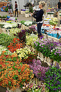 """""""New Covent Garden Wholesale Flower Market"""" (Photograph must be captioned like this - I had to sign a contract!!)<br /><br />""""Zest"""" Market shop sells British flowers, and also international factory flowers. <br /><br />The main selling days for local British fresh flowers are on Monday and Thursday mornings. The main sellers are Pratleys<br /><br />British local flowers, grown nearby, count for around 10% of the UK market, traveling less than a tenth of their foreign counterparts which are often flown in from abroad. Nearly 90% of the flowers sold in the UK are actually imported, and many travel over 3000 miles. Local flower farms help biodiversity, providing food and habitat to a huge variety of wildlife, insects including butterflies, bugs, and bees. Often local flower farmers prefer to grow organic rather than using pesticides. British flowers bloom all the year around, even in the depths of winter, and there are local flower farms throughout the country.<br /><br />Many people like the idea of the just picked from the garden look, and come to flower farms throughout Britain to pick their own for weddings, parties and garden fetes. Others come for the joy of a day out in the countryside with their family. Often a bride and her family will come to pick the flowers for her own wedding, some even plant the seeds earlier in the year."""