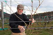 Jim Law is the owner of Linden Hardscrabble Vineyard on top of the Blue Ridge Mountains in Linden, Va. Photo/Andrew Shurtleff
