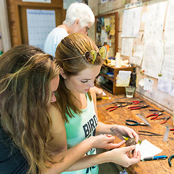 Two women study a recently captured Canada warbler at the Manomet Banding Lab in Manomet, Massachusetts.