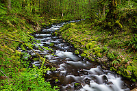 Gorton Creek in the Columbia River Gorge flows through the lush green forests creating a picturesque landscape scene.