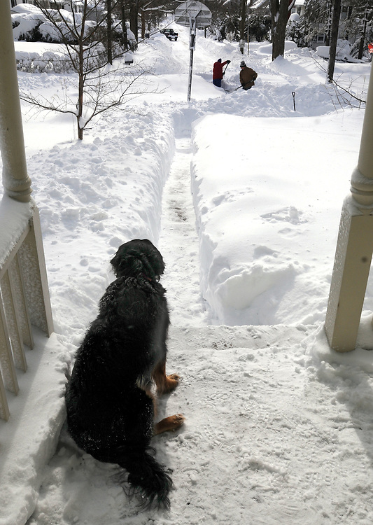 The Blizzard of 2013, Nemo, in the Ivoryton section of Essex. Rocky watches as his owners Wendy and Chet Arnold shovel a path to the street not only for themselves but for Rocky to get out to do his business. Mara Lavitt/New Haven Register<br /> <br /> 2/9/13
