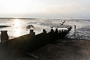 Sea gulls take-off from a sea defence groyne as staycationers walk on low-tide mud flats, on 25th July 2021, in Whitstable, Kent, England.