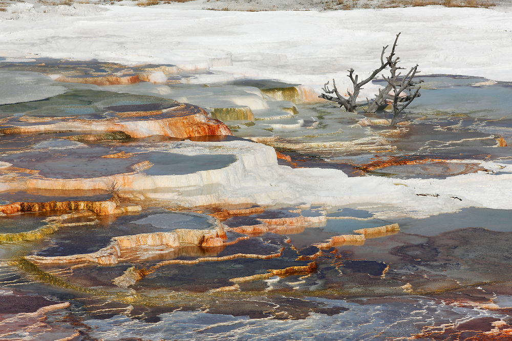 Main Terrace, Mammoth Hot Springs, Yellowstone NP, Wyoming (Estados Unidos)