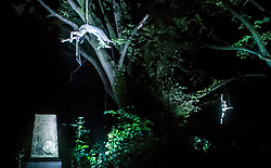 An artist performs in Hull's General Cemetery during a performances of internationally acclaimed production Depart, part of Hull UK City of Culture 2017.