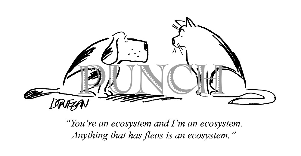 """You're an ecosystem and I'm an ecosystem. Anything that has fleas is an ecosystem."""