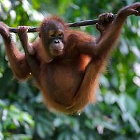 MY, Malasia_Borneo