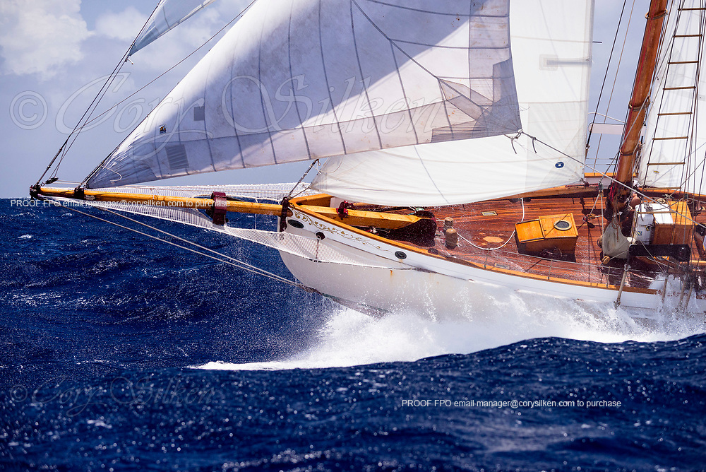 Coral sailing in the Butterfly Race at the Antigua Classic Yacht Regatta.