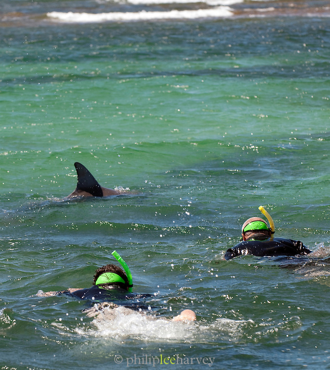 Snorkelling with Dolphins at Baird Bay, Eyre Peninsula, South Australia, Australia