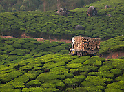 A truck carrying logs of wood travels along a road in Munnar, a tea plantation hill station in Kerala, India