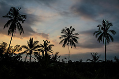 Sunsets and Silhouettes, Ubud, Bali