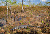 Swamps/Marshes