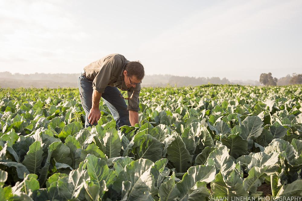 Steve Pederson, owner of High Ground Organic Farm in Watsonville, CA.