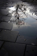 "The underworld: Tree of life - reflection of winter tree in puddle on the street in Amsterdam, the Netherlands. Could this be a sign of Yggdrasil, the world tree of Norse mythology? This mage can be licensed via Millennium Images. Contact me for more details, or email mail@milim.com For prints, contact me, or click ""add to cart"" to some standard print options."