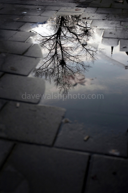 """The underworld: Tree of life - reflection of winter tree in puddle on the street in Amsterdam, the Netherlands. Could this be a sign of Yggdrasil, the world tree of Norse mythology? This mage can be licensed via Millennium Images. Contact me for more details, or email mail@milim.com For prints, contact me, or click """"add to cart"""" to some standard print options."""