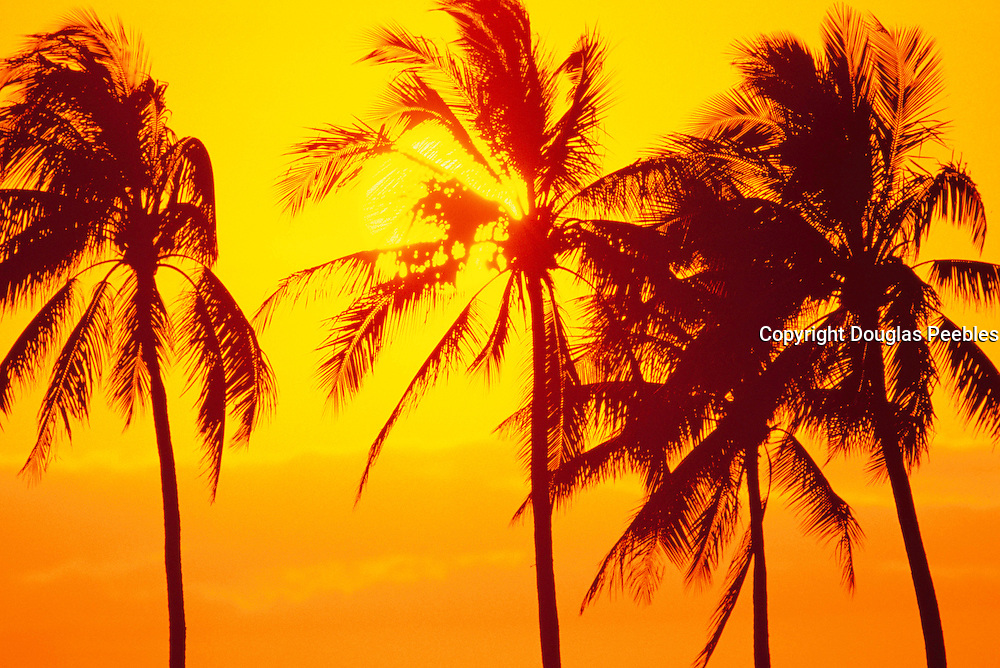 Sunset, Palm Trees, Hawaii<br />