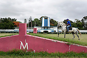 The equestrian centre of Maputo was born in the 1950 during the Portuguese Colonial time. Considered for years one of the most important place of the sub- Saharan Africa for the dressage it resisted to the colonial war and to the Mozambique civil war, his decadence started after the civil war when a poisoned batch of horse food killed most of the animal. Today the centre is trying to resume his old glory living between the past and an uncertain future. Mr Silva riding at the Maputo Equestrian Centre.