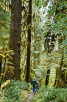 Hoh River Trail, Hoh River Rain Forest. Olympic National Park, WA