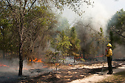 Prescribed Burn in longleaf pine forest.<br /> Amy Clifton<br /> The Orianne Indigo Snake Preserve<br /> Telfair County, Georgia<br /> USA