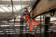 Progress of Paddington Station Span 4 project. Work being carried out by Morgan Est/Morgan  Ashurst, Capital Projects. Rope access workers fitting safety netting