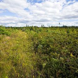 A logged area between Moosehead Lake and Misery Ridge in Maine USA