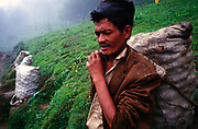 A peasant farmer rests while carrying a sack of vegetables on his way to market. Dolakha region, Nepal