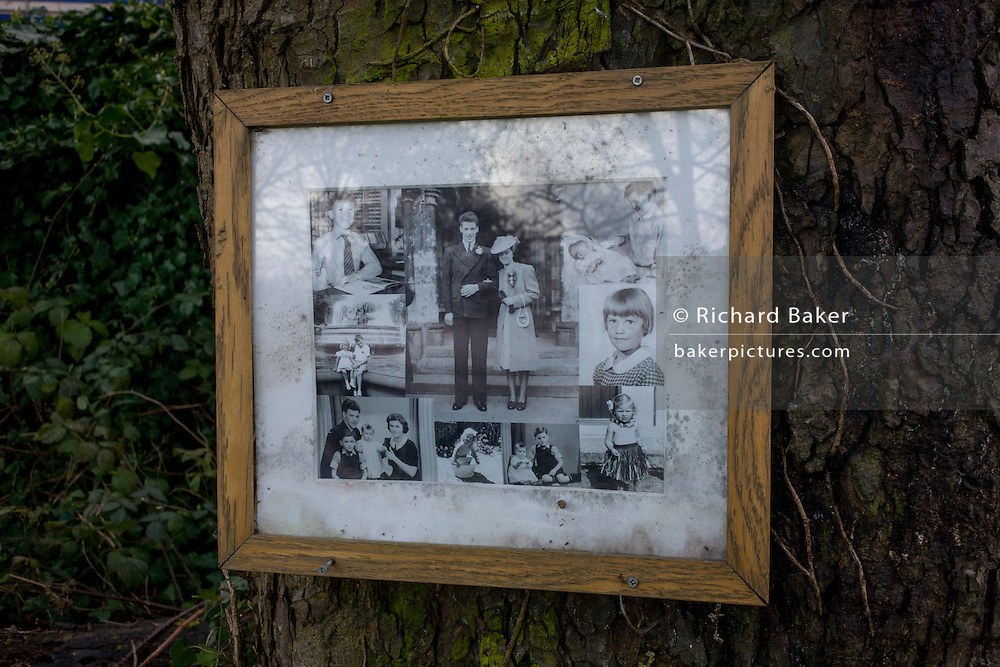 Family album of photos framed and attached to a tree in a south London cemetery.