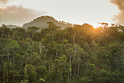 Cloud forest, Manu National Park, Peru, South America