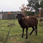 Goat with no name - Prova impressa em jacto de tinta sobre papel de museu Epson Cold Press Bright<br /> Tiragem numerada e assinada de 25 provas.<br /> Preço unitário €175 (IVA incluido)<br /> Tamanho da folha 59,4x42 cm / Imagem 52x35 cm<br /> Envio em correio registado. Portes incluídos para Portugal continental.
