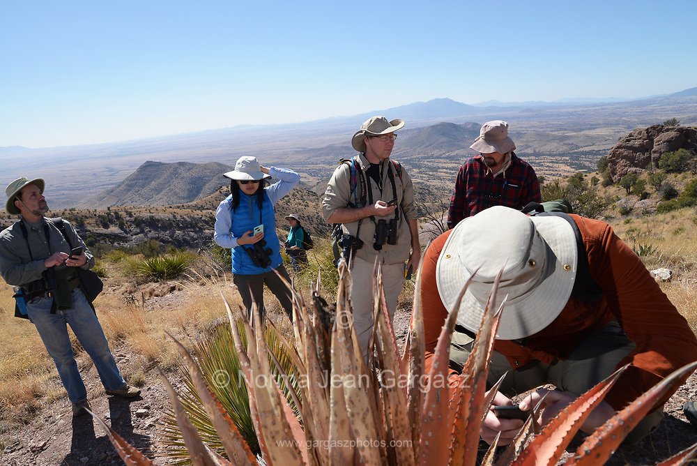 Border BioBlitz, March 3, 2018, Coronado National Memorial, Hereford, Arizona, USA.  Kevin Weitemier, right, uses the iNaturalist app to identify a plant species along the Arizona Trail.