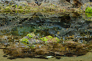 Low Tide and a Tidepool at Oceanside Oregon.  Reflections of the hillside with barnacles, anemones, sea stars, and a dead crab.