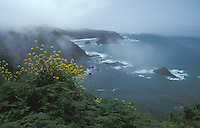 Pacific coast of Northern California