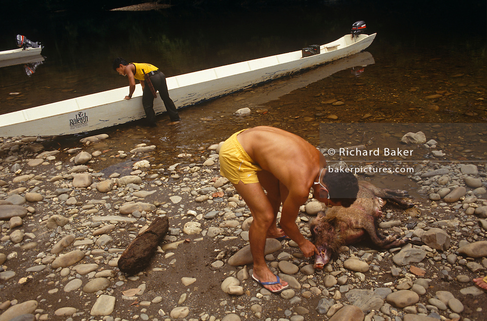 A young adventurer bends down to inspect a newly-killed forest pig whilst on a Raleigh International expedition in Brunei, Borneo. The hog is dead and the boy wears only flip-flops and shorts but this is one of the remotest and most dangerous habitats on the planet and will have been a life-changing experience for him and his friends from all over the world who will have raised several thousands of sponsored Pounds for the privilege of spending two months away from a dull, comfortable life at home, rather than building community projects like bridges or schools. Raleigh International is a charity that provides adventurous and challenging expeditions for people from all backgrounds, nationalities and ages, especially young people. Over the last 23 years, 30,000 people have been involved in more than 250 expeditions to over 40 countries.