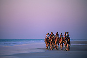 Western Australia, Kimberley. Broome. Camels at sunset, Cable Beach.