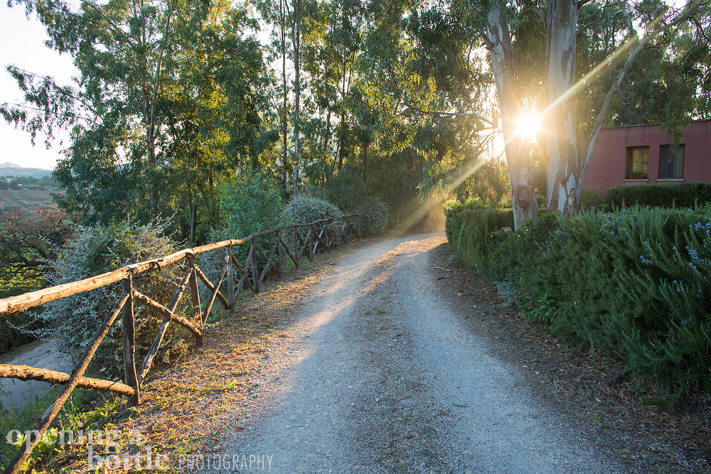 Sun flare in early morning light on a road in the Sicilian countryside.