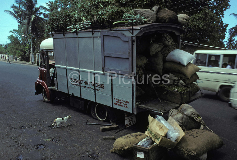 A nosy cat inspects a lorry that with a flat tyre, and its spilled market produce in the middle of the Galle Face Road in the Sri Lankan capital, on 16th April 1980, in Colombo, Sri Lanka.