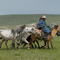 Nomadic herders tend to their family's stallions after a 20km race at a traditional naadam festival on a remote pass near Muren, Mongolia.