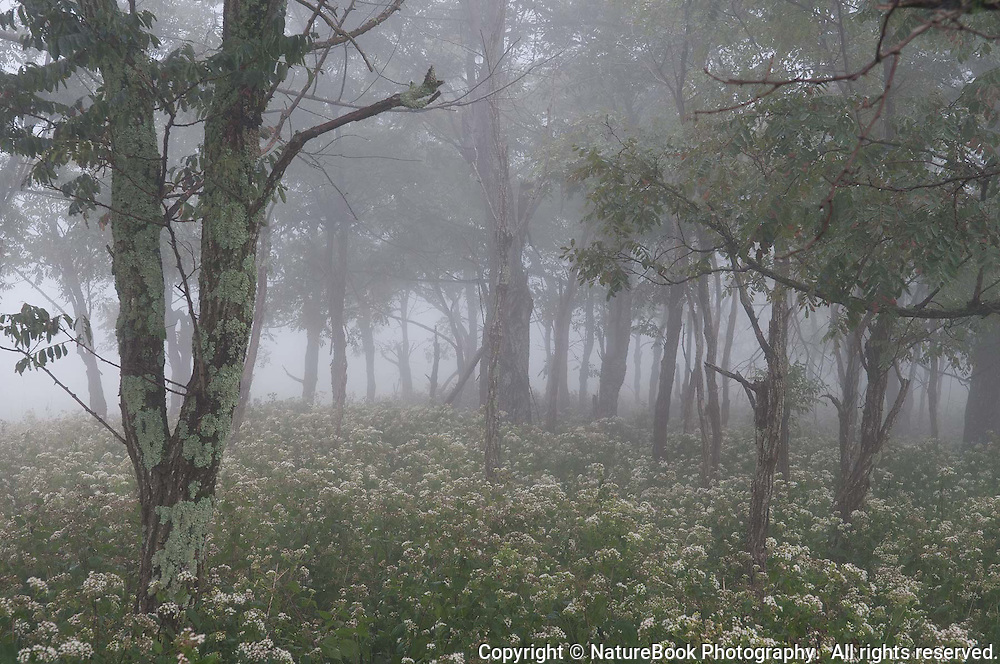Fog settles in on the trees and meadows at Shenandoah National Park.
