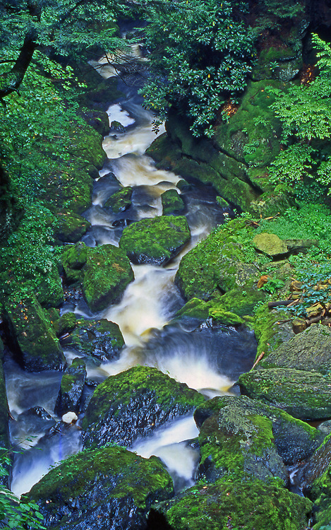 Moss and rock, water flow below falls, Bushkill Falls, Pocono Mountains, Pike County, PA