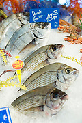 Raw Dorade Gris - sea bass or sea bream - on display for sale in food market at St Martin de Re, Ile de Re, France