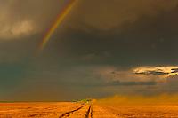 Combine harvestors during the wheat harvest, Schields & Sons Farming, Goodland, Kansas USA.