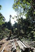 Illegal logging by timber traffickers a few months. Rainforest canopy destroyed, timber and sawdust everywhere. Small trees and undergrowth damaged<br /><br />An Amazonian tribal chief Almir Narayamogo, leader of 1350 Surui Indians in Rondônia, near Cacaol, Brazil, with a $100,000 bounty on his head, is fighting for the survival of his people and their forest, and using the world's modern hi-tech tools; computers, smartphones, Google Earth and digital forestry surveillance. So far their fight has been very effective, leading to a most promising and novel result. In 2013, Almir Narayamogo, led his people to be the first and unique indigenous tribe in the world to manage their own REDD+ carbon project and sell carbon credits to the industrial world. By marketing the CO2 capacity of 250 000 hectares of their virgin forest, the forty year old Surui, has ensured the preservation, as well as a future of his community. <br /><br />In 2009, the four clans and 25 Surui villages voted in favour of a total moratorium on logging and the carbon credits project. <br /><br />They still face deforestation problems, such as illegal logging, and gold mining which causes pollution of their river systems