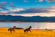 Running horses by the lake at sunset