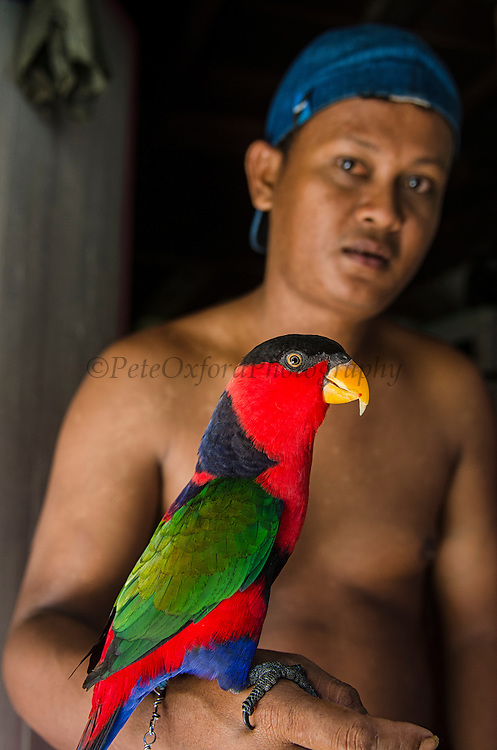 Local person & Black-capped Lorikeet (Lorius lory) as pet<br /> Biak Island<br /> West Papua<br /> Indonesia