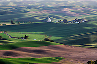 In the early summer, the rolling hills of the Palouse in Washinton State are painted green with growing grains